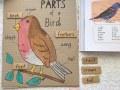 deli-telesa-ptica